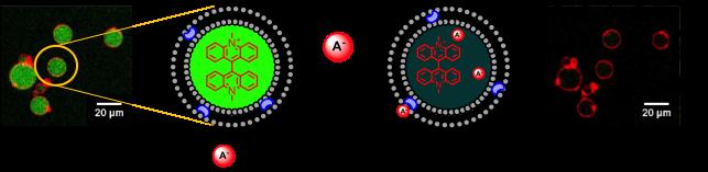 Anion transport through lipid bilayers
